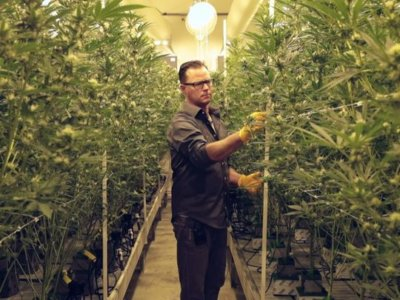 Want to learn more about the Coachella Valley's own cannabis trade association?