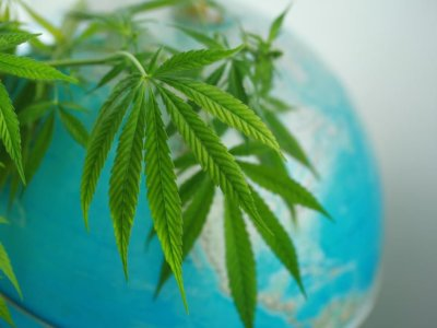 The Economic Implications Behind The Cannabis Legalization Debate