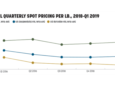 Wholesale Cannabis Prices Crashed in 2018