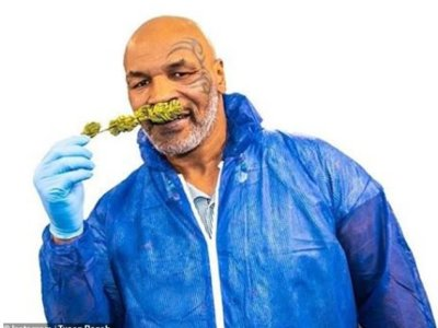 Hot boxing! Inside Mike Tyson's pot empire - from 'premium cannabis' to plans for a 420-acre marijuana holiday resort in the California desert with a 'weed university' and music festival venue