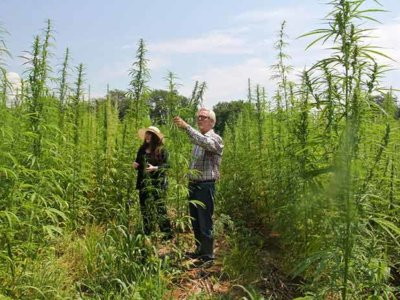 Riverside County Supervisors back off immediate prohibition of hemp production